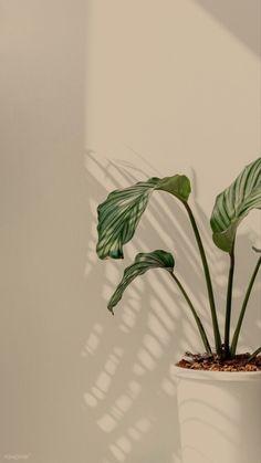 Phone Wallpaper Images, Plant Wallpaper, Aesthetic Desktop Wallpaper, Flower Phone Wallpaper, Iphone Background Wallpaper, Scenery Wallpaper, Phone Wallpapers, Cute Pastel Wallpaper, Soft Wallpaper