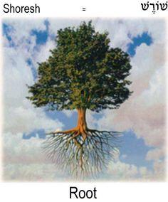 Root = Shoresh in Hebrew
