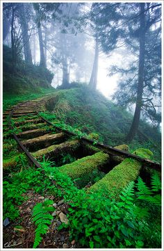 """ Overgrown railway tracks in forest ~ Jiancing Historic Trail, Taipingshan National Forest ~ Taiwan. "" "" Overgrown railway tracks in forest ~ Jiancing Historic Trail, Taipingshan National Forest ~ Taiwan. Beautiful World, Beautiful Places, Beautiful Pictures, Amazing Photos, Beautiful Forest, Beautiful Dream, Beautiful Scenery, Stunning View, Train Tracks"