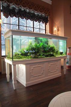 Пресноводный аквариум с живыми растениями в зимнем саду