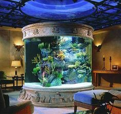 All Glass Aquarium | Posted on 02 January 2012. Tags: all glass aquarium , glass aquarium