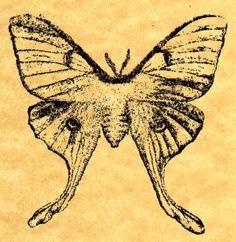 Luna Moth stamp. $2.93