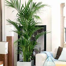 Piante da appartamento: scelta e cura delle piante da interno