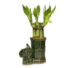 Small Lucky Bamboo Arrangement Happy Elephant Favor by IndoorZen, $15.00
