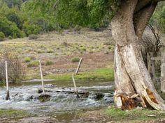 #patagonia #argentina Handmade Bags, Patagonia, Holiday, Plants, Argentina, Handmade Handbags, Vacations, Holidays, Plant