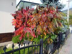 Podzimní zabarvení listu - škumpa, místo focení Rájecké Teplice, Slovenská republika