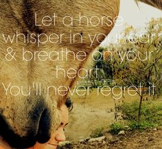 Horse quotes. Man I love my horse