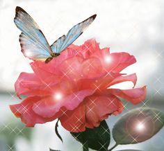 La rose et le papillon - KDO de... MA JUMELLE/MA DOMIE
