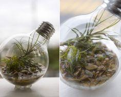 Light bulb terrariums – the industrial aesthetic meets nature! – DesignSwan.com