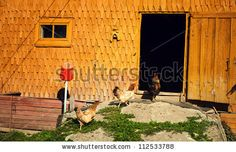Chicken wood stable rooster