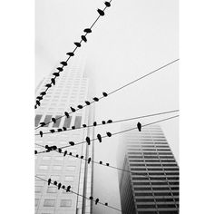 City Birds Strolling through downtown San Francisco during our vacation, the birds sitting on the wires and skyscrapers in the foggy background caught my attention. A lucky shot! Photo and caption by Matthias Luetolf/National Geographic Photo Contest Urban Photography, Street Photography, Minimalist Photography, Landscape Photography, Foto Picture, Shot Photo, Big Picture, National Geographic Photo Contest, Mobile Photo