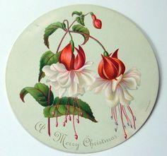 VICTORIAN CHRISTMAS CARD c.1880s Circular 9.5 cms diam. Fuschias | eBay