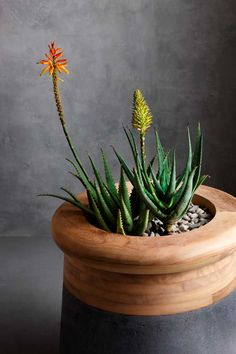 Beautiful Stone Like Planters By Saota For Indigenus | Planter ... Soma Blumenkubel Wiid Design Bilder