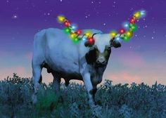 christmas longhorn lights