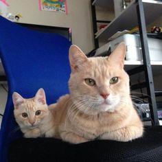 copy cat 3