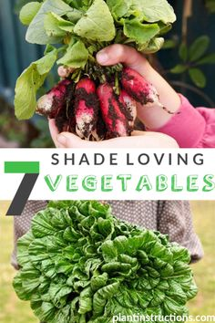 These 7 shade loving vegetables are great for any garden that has more than its fair share of shade! Organic Gardening, Gardening Tips, Indoor Gardening, Garden Pests, Garden Fertilizers, Plantar, Plant Needs, Apple Tree, Winter Garden