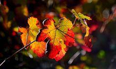 Les couleurs d'automne - null