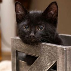 Crate training for cats. Baby Kittens, Cute Cats And Kittens, I Love Cats, Kittens Cutest, Baby Animals, Cute Animals, Cat People, Dog Crate, Beautiful Cats