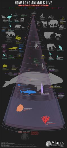 We've illustrated the life span of animals longevity ranges from a few years to 500 or more! See where you lie on our list of the life spans of 50 animals. Circle Of Life, The Life, Greenland Shark, Bizarre Animals, Animal Facts, Do You Know What, Dog Cat, Wildlife, Around The Worlds