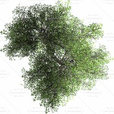 24 Awesome tree plan view png images