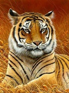 All images are the original artwork of nature artist and wildlife artist Dr. Jeremy Paul and are protected by international copyright laws. Beautiful Cats, Animals Beautiful, Cute Animals, Tiger Pictures, Animal Pictures, Animal Paintings, Animal Drawings, Big Cats, Cool Cats