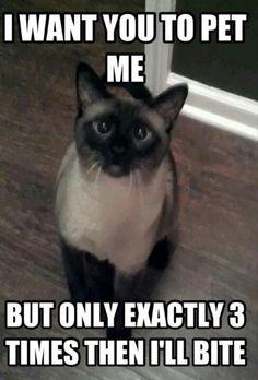 Cat logic. I love it!