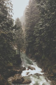 The rushing river between the silent trees<3