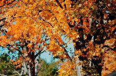 New print available on licensing.pixels.com! - 'Beautiful Autumn Trees 3' by Lanjee Chee - http://licensing.pixels.com/featured/beautiful-autumn-trees-3-lanjee-chee.html via @fineartamerica