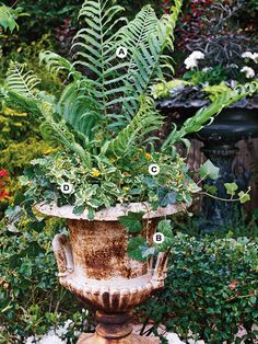You don't need lots of color for a gorgeous container garden. Here, different shades of green and interesting textures combine delightfully. This planting grows best in full shade.  A. Ostrich fern (Matteuccia struthiopteris) -- 1  B. Canary Island ivy (Hedera canariensis) -- 3  C. Sanvitalia 'Little Sun'  -- 3  D. Plectranthus 'Variegata' -- 3
