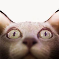 Cat / Animals