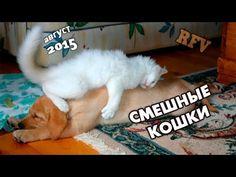 Приколы про кошек #18 ∙ Приколы про животных 2015 ∙ Funny Cats Compilati...