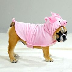 $19.99 Piggy Pooch Dog Costume | Cool People Shop This piggy pooch dog costume is soft polyester pig costumes. You will love dressing your dogs parties in hilarious piggy pooch costume.  Made of soft polyester with Velcro closures for easy fastening and a secure fit. Packaged in a polybag with an insert. Hand-wash in cold water and line-dry. Available in small size and it is fits for Boston terrier, jack Russell terrier, Maltese, pug, silky terrier breeds. Measures 12-inch length.