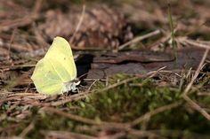Pierwszy motyl tej wiosny :)