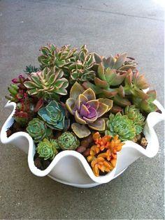 Simply Succulent Pla