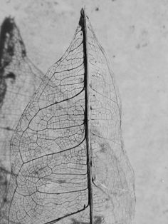 L'ultima foglia d'autunno @Alessandro Fais #Fotografia #Passione #Nikon #Naturamorta #Natura #Autunno #Foglia