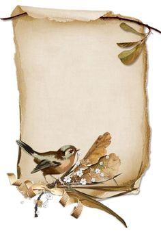 Vintage bird Plus Vintage Birds, Vintage Frames, Vintage Paper, Vintage Prints, Vintage Stuff, Borders For Paper, Borders And Frames, Old Paper Background, Paper Frames
