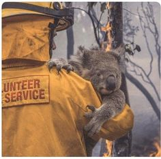 Koala is carried off to safety from the fire Wombat, Save Animals, Animals And Pets, Sad Pictures, Real Hero, Fur Babies, Instagram, Koala Bears, School Kids
