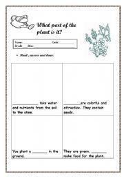 English worksheet: What part of the plant is it ?