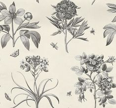 Etchings and Roses (DPFWER106) - Sanderson Wallpapers - Beautifully engraved black etchings of roses on a cream background with a delicate iridescent metal effect which doesn't show on image.  Available in other colours with coordinating fabric.  Please ask for a sample for true colour match.