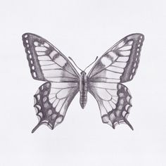 Butterfly drawing // by Jacqui Humble