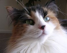 Breakthrough in Cat Allergy Research Offers Hope for New Treatments - The Conscious Cat No need to surrender your darling pets! YAAAY!!!