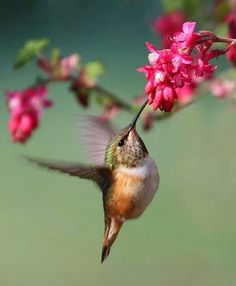 I love humming birds. Reminds me of my NawNaw. Miss her