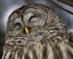 this owl is so happy!