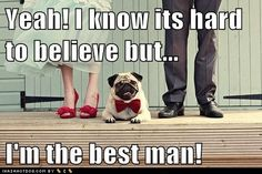 LOL - i can totally see this happening - but different dog I think.