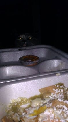 Cats love it when it's dark – they can grab your food without you seeing it!