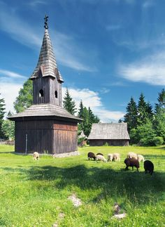 Rare wooden bell tower with sheep nearby during summer. This preserved construction is located in open-air museum of Litov Village, near Pribylina, Liptov region, Slovakia. Other constructions can be seen in background. Litov Village museum shows typical folk architecture and life-style of Slovak rural communities in the previous centuries.