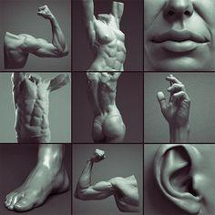Digital Sculpting Human Anatomy Studies by Adrian Spitsa on ArtStation.