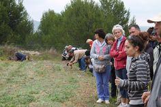 Visites safranière Gruissan (Aude) 2014 Saffron - France