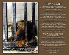 Rescue Me - Terri Oronato Please save an animal. You will be rewarded! Dog Rescue Shelters, Rescue Dogs, Animal Rescue, Trail Of Tears, Waiting For Love, Animal Help, All About Animals, Cat Quotes, Dogs Of The World