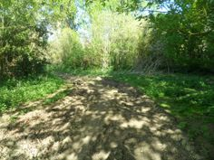Dried tractor tracks in the shade - 18.4.2014